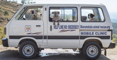Dharamsala Animal Rescue, India